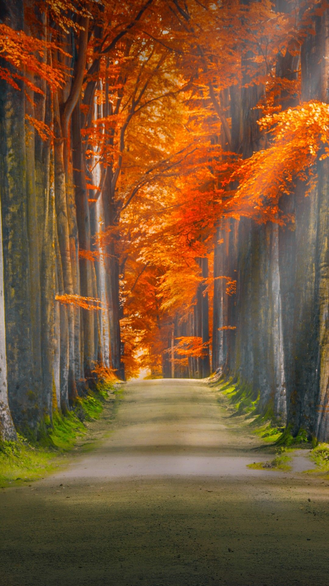 The Wallpapers Autumn Road