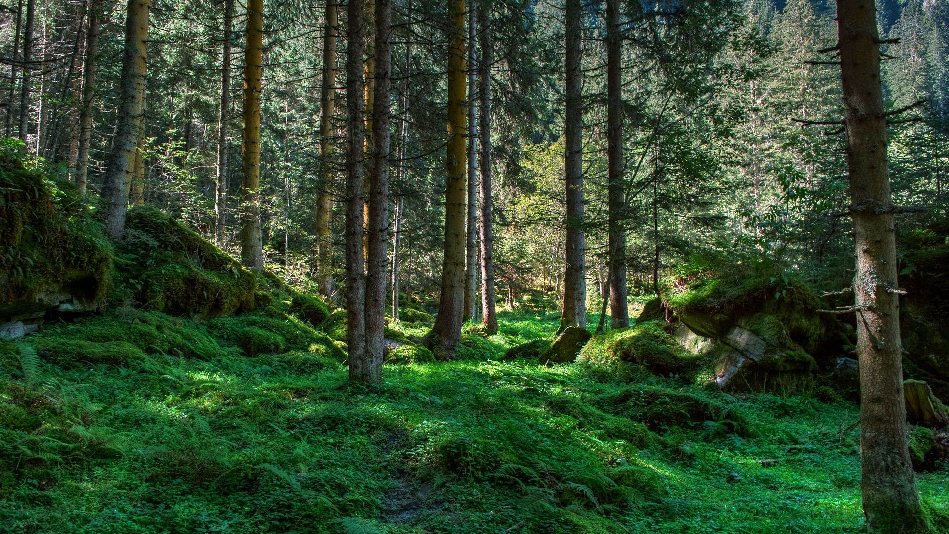 The Wallpapers Forest