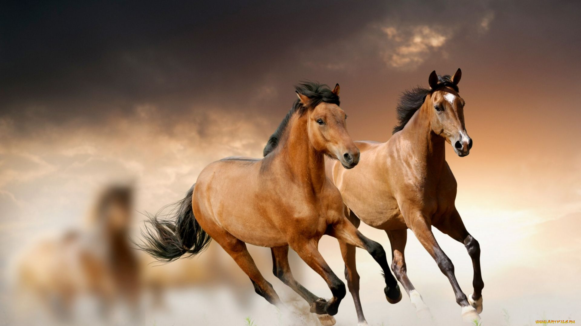 The Wallpapers Horses Beautiful Large Full Screen Free