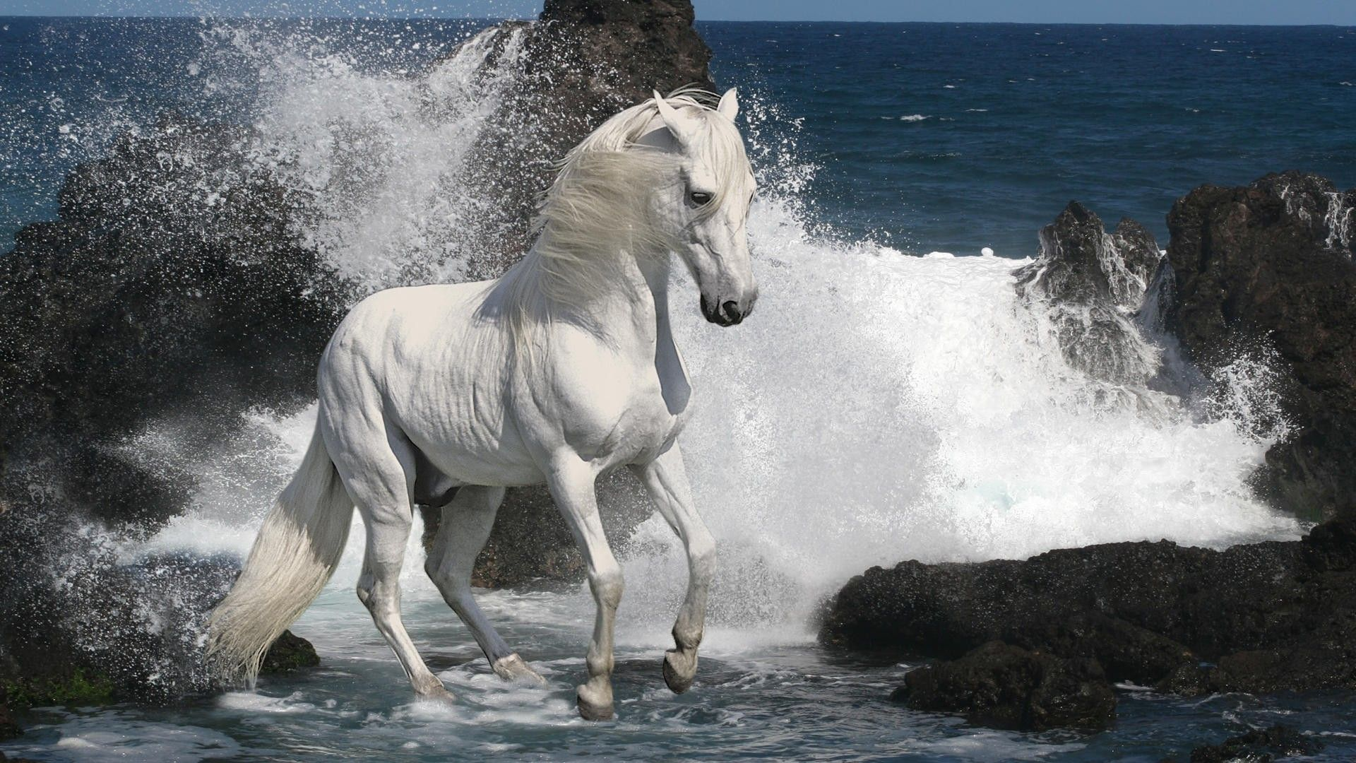 The Wallpapers Horses Beautiful