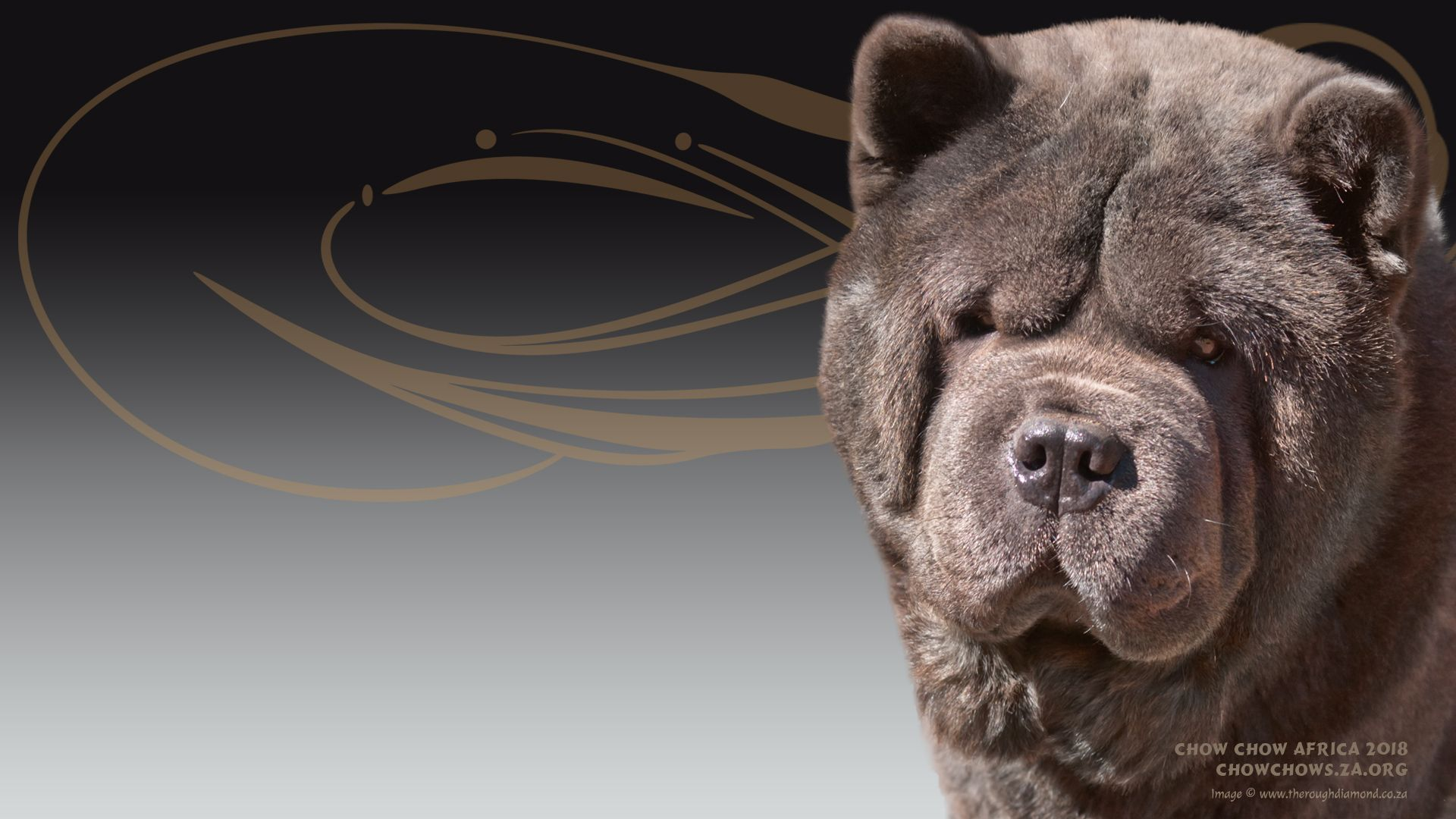 The Wallpapers Of Chow Chow