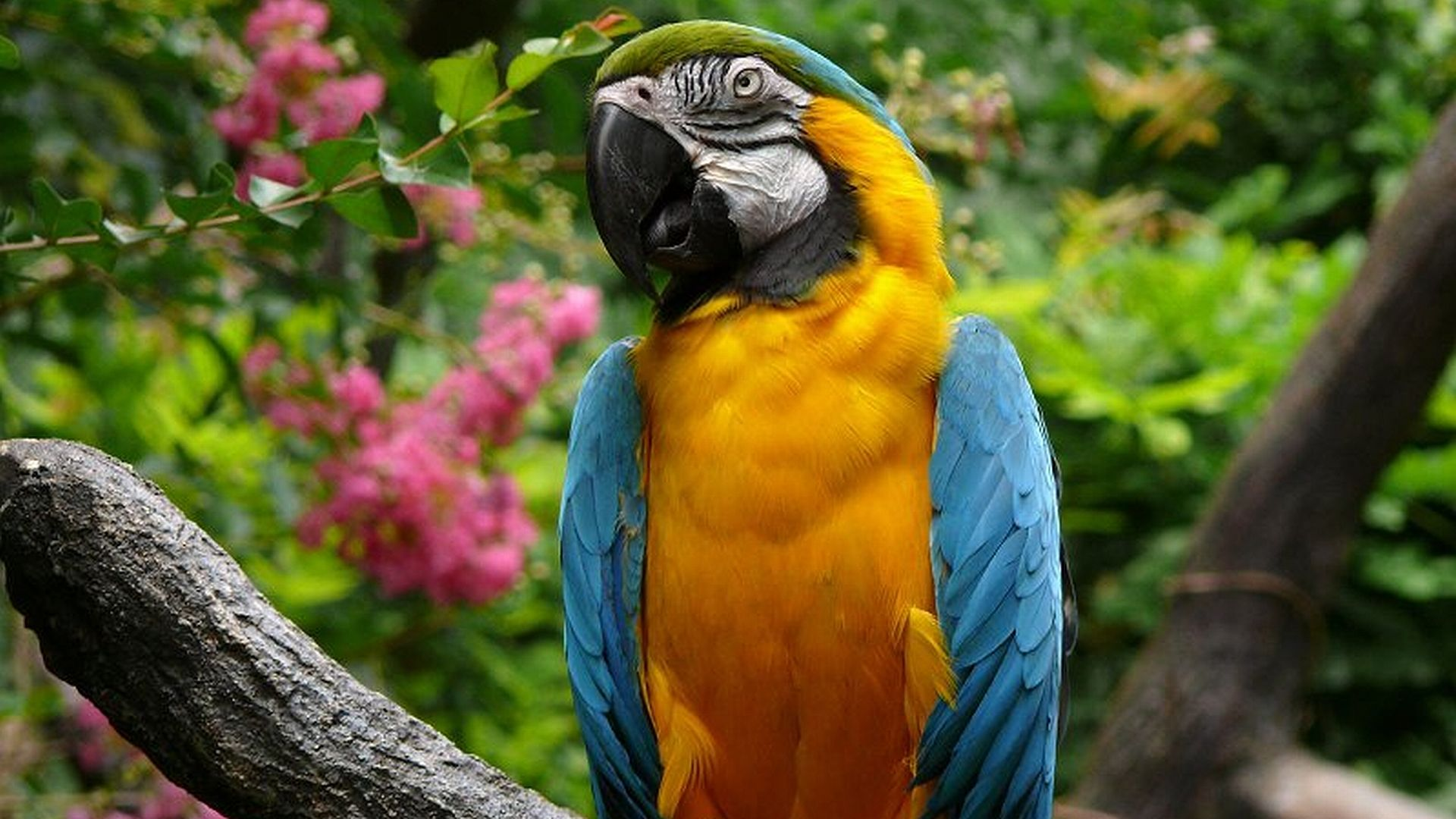 The Wallpapers Of Parrots
