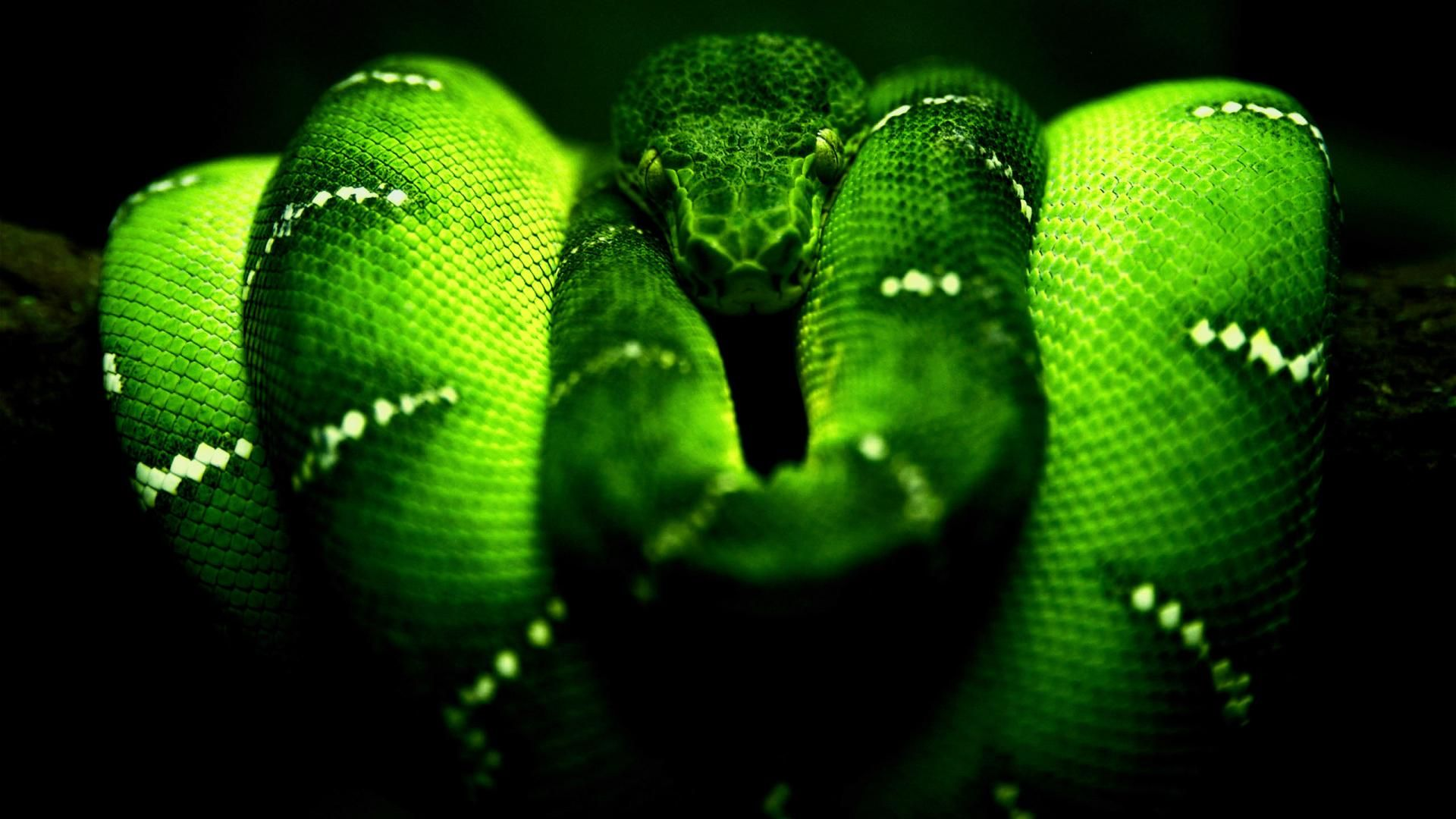 The Wallpapers Snake