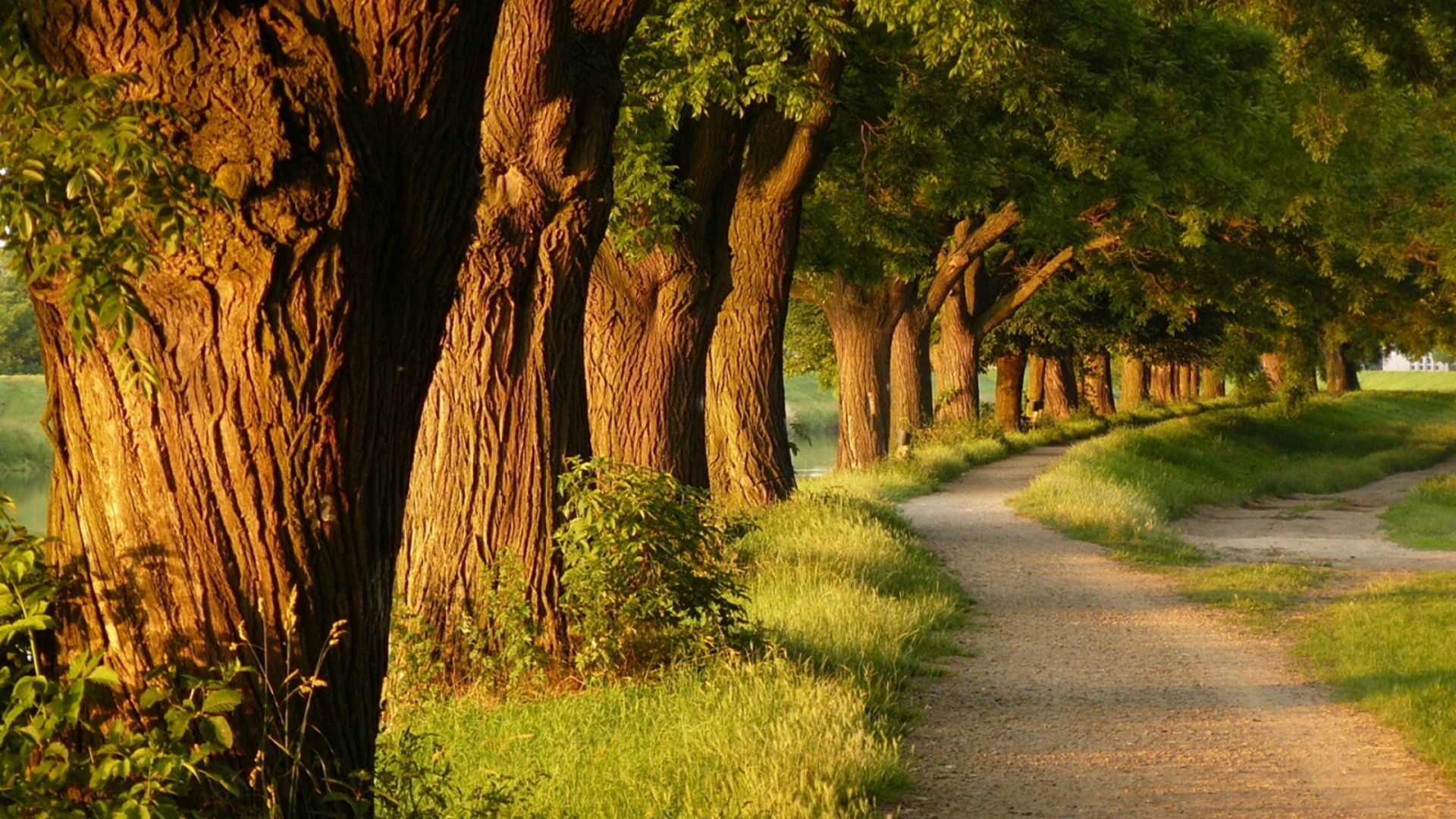 The Alley Of Trees