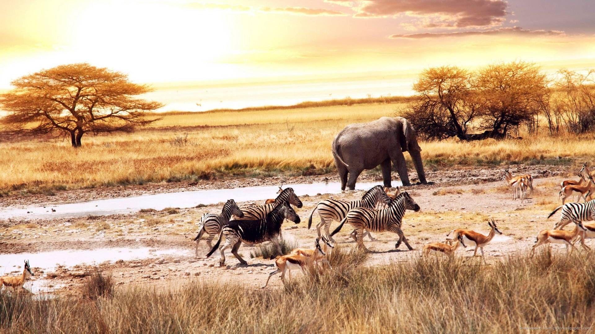 The Animals Of The Savannah