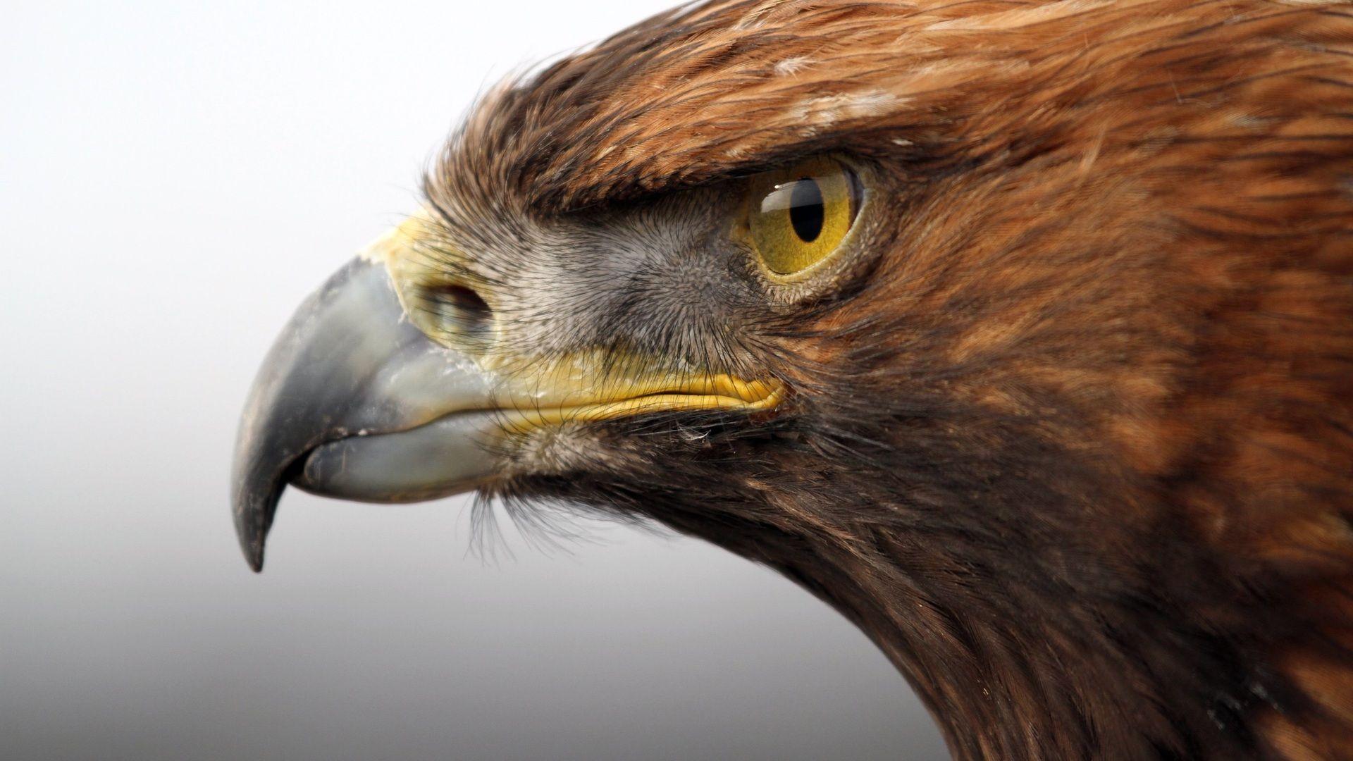 The Beak Of Birds Of Prey