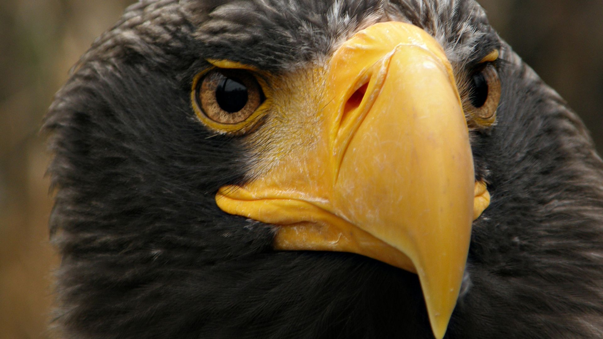The Beak Of The Eagle Photo