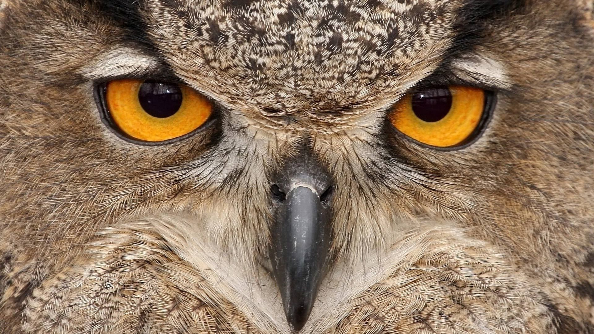 The Beak Of The Owl