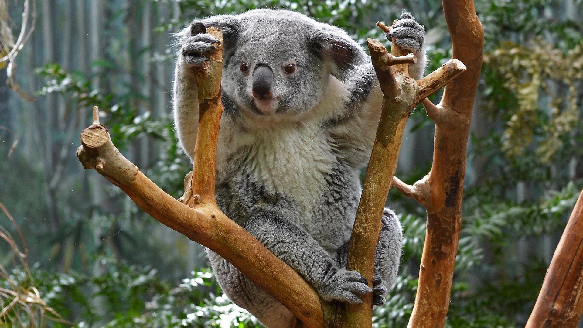 The Cone Koala Park
