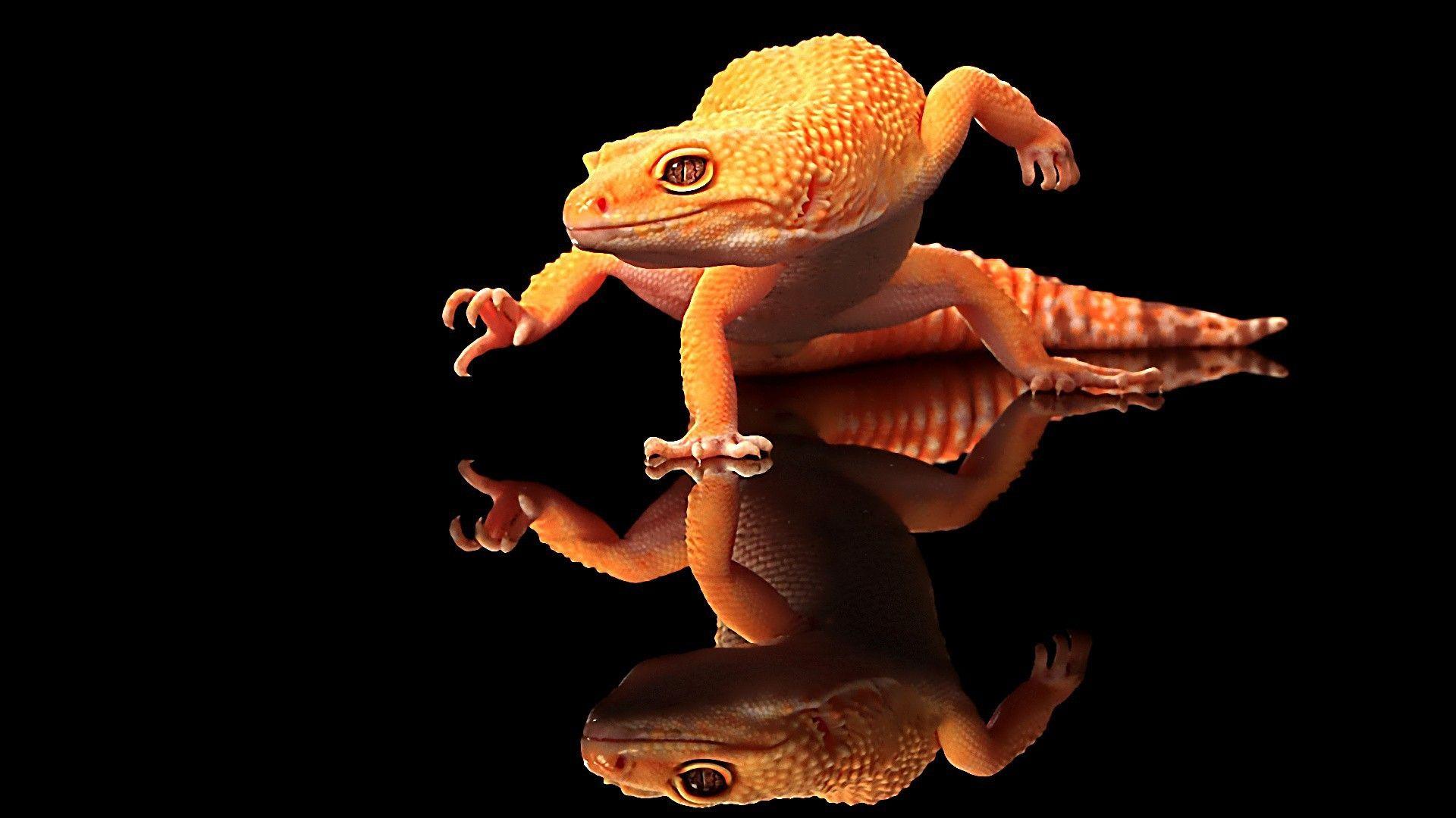 The Dancing Gecko