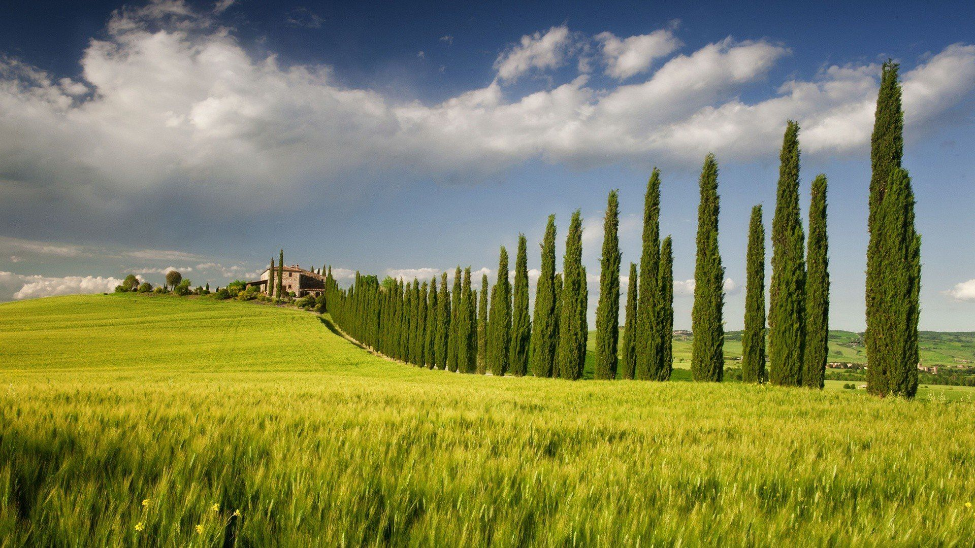The Fields Of Italy Photo