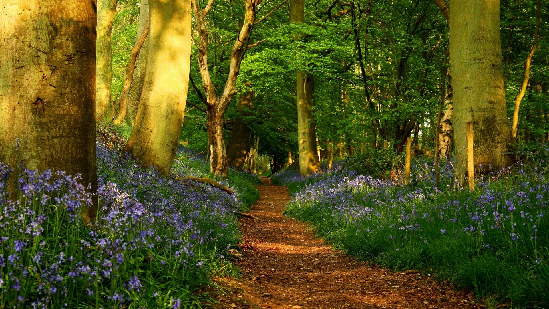 The Forest Path Flowers