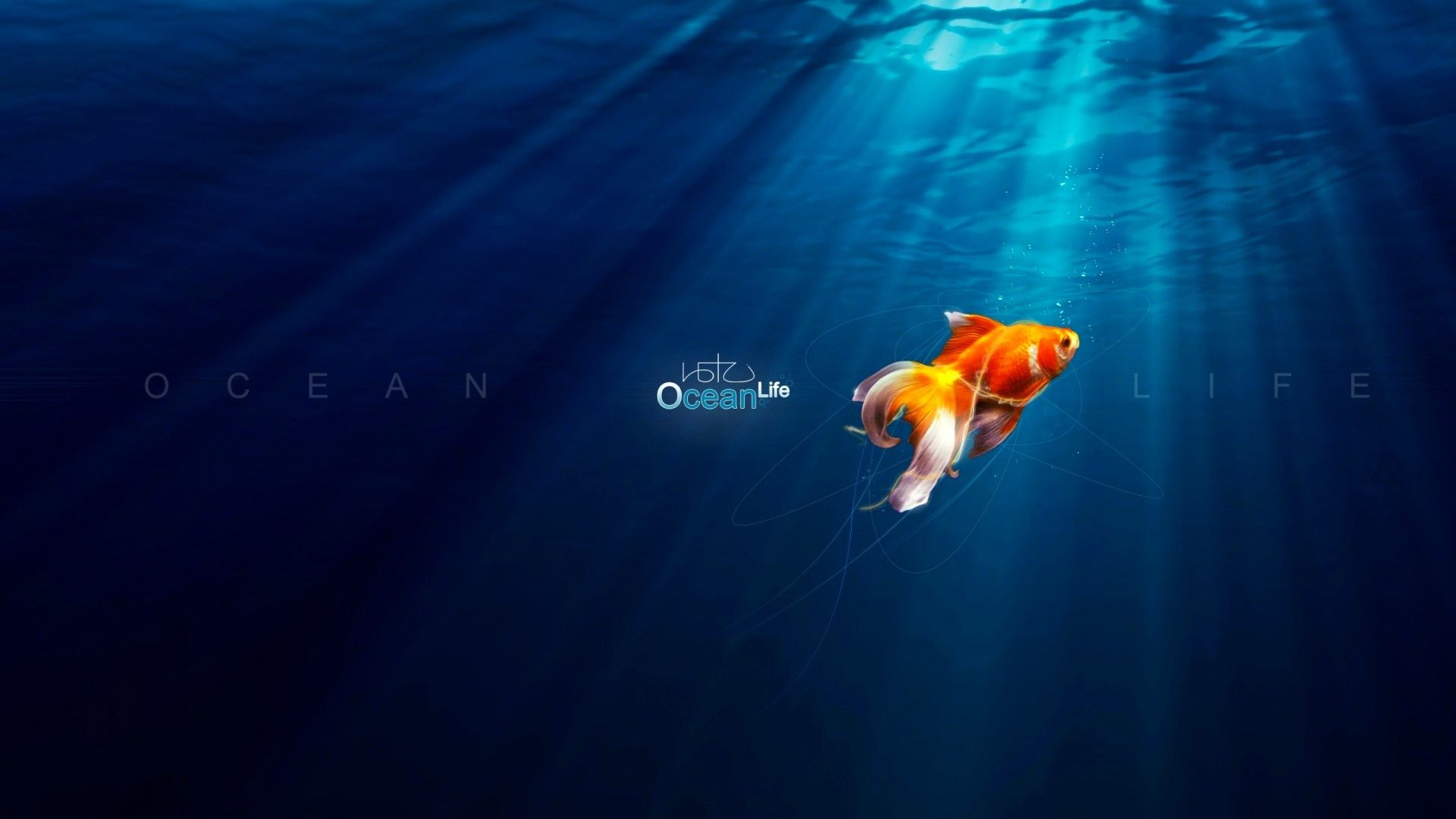 The Goldfish Pictures In The Ocean