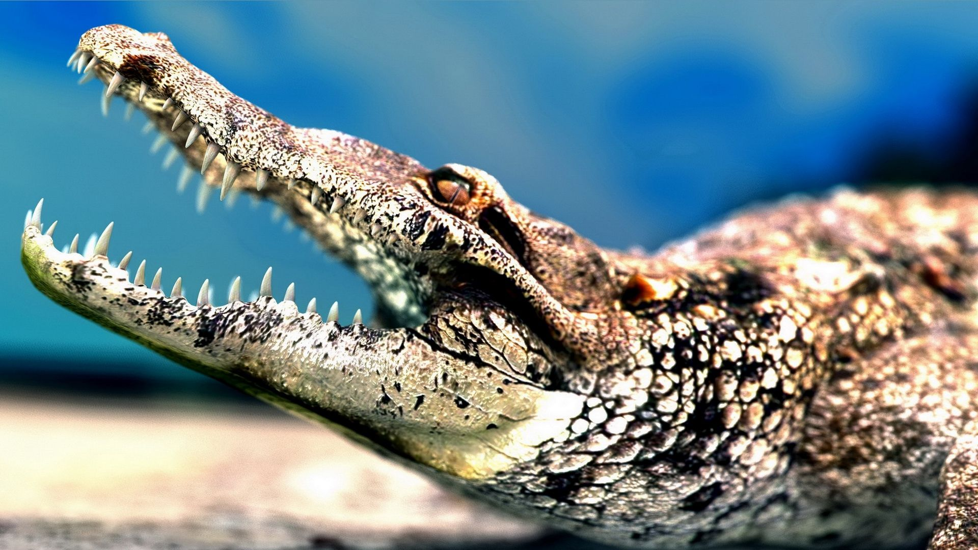 The Jaws Of The Caiman