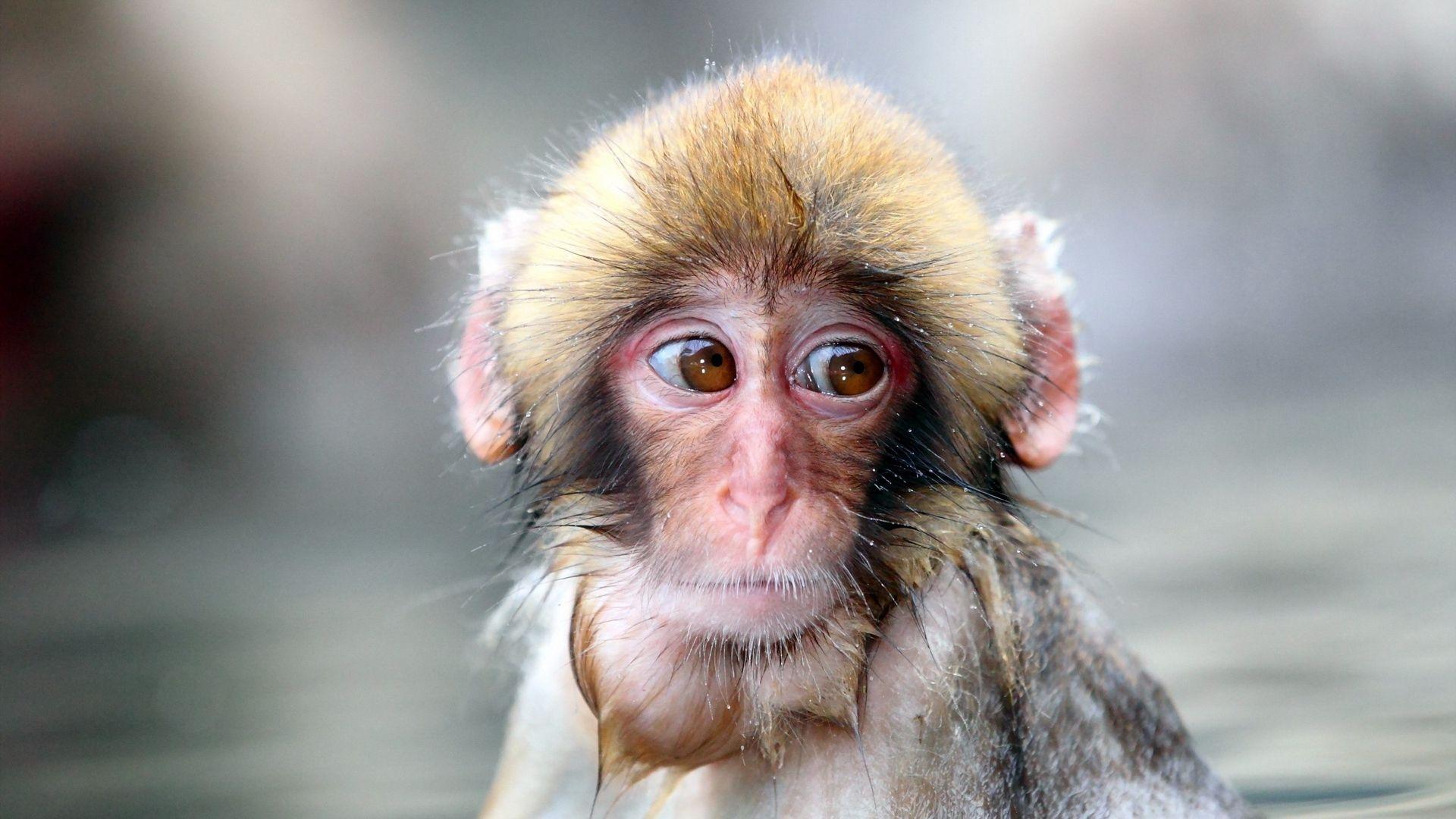 The Monkey Is Sad