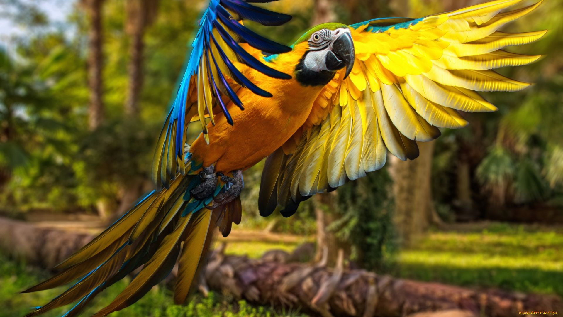 The Most Beautiful Parrots In The World 4k Photo