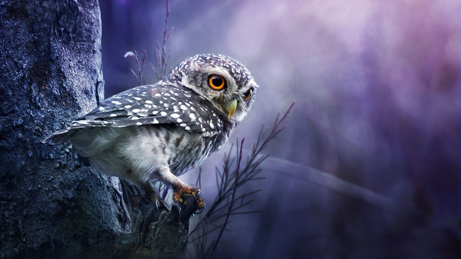 The Owl On The Desktop