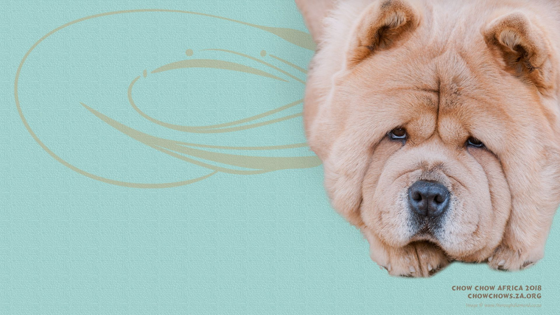 The Smooth Chow Chow