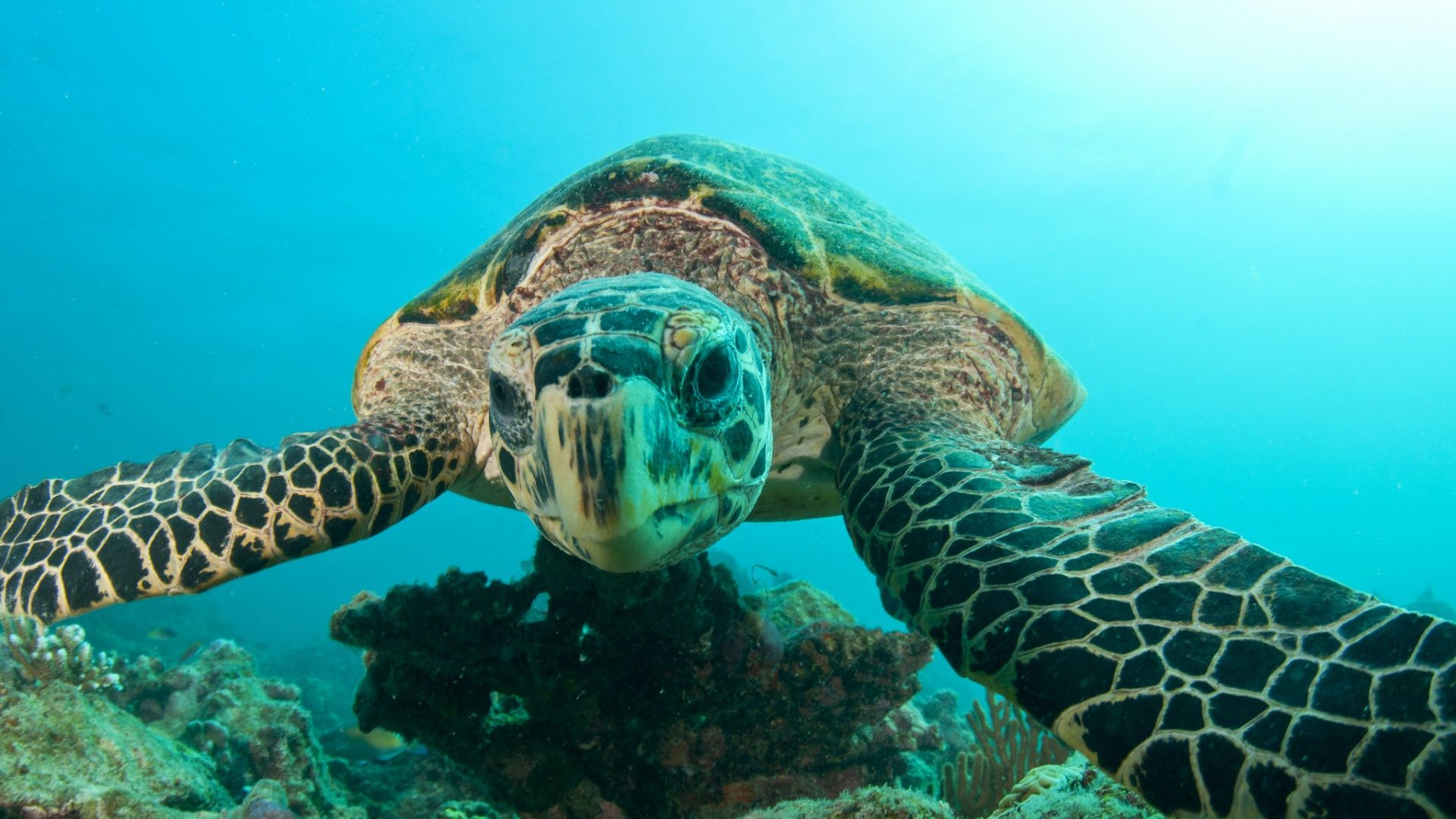The Underwater World Of Turtles