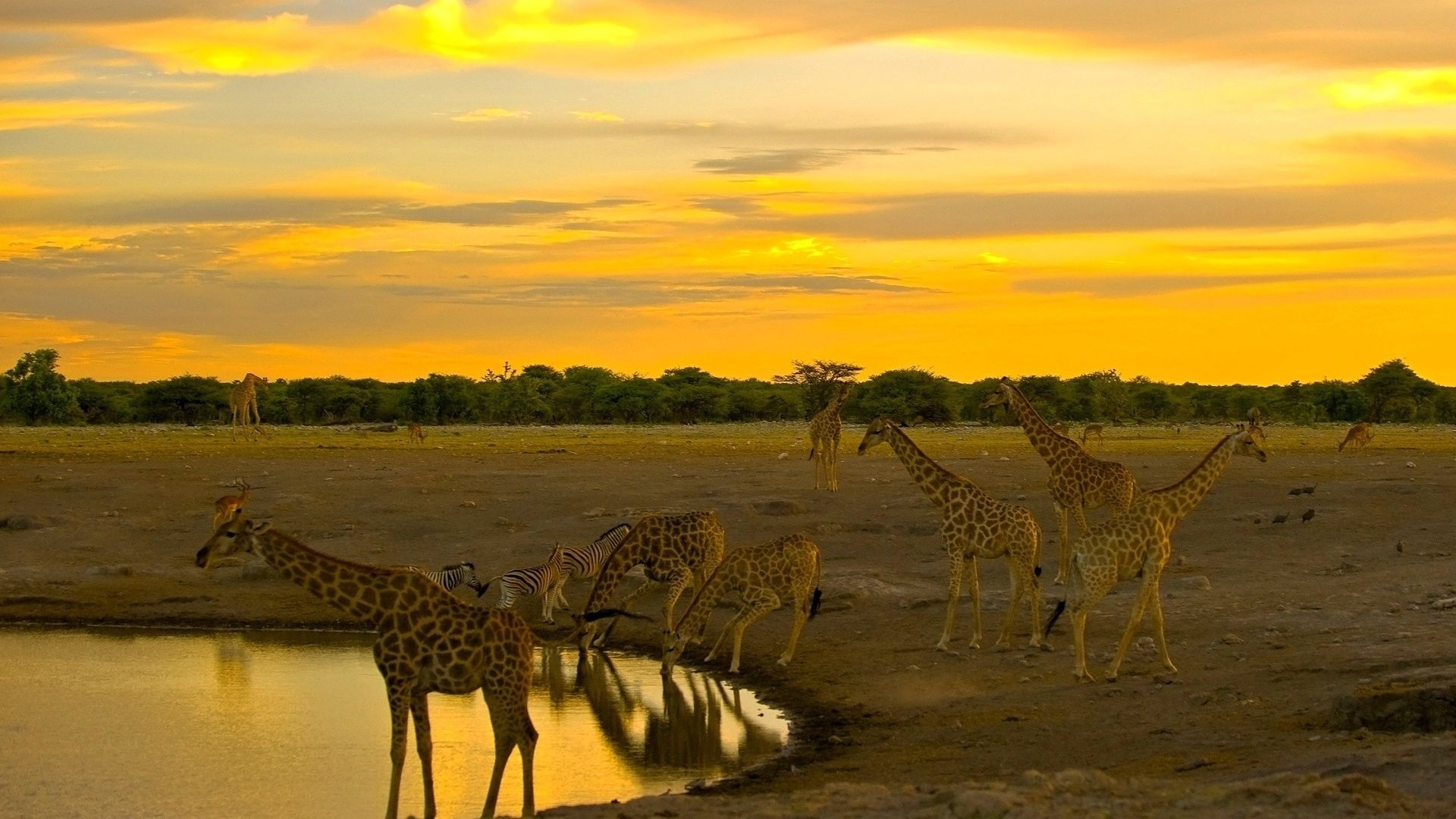 The Watering Hole In The Savannah