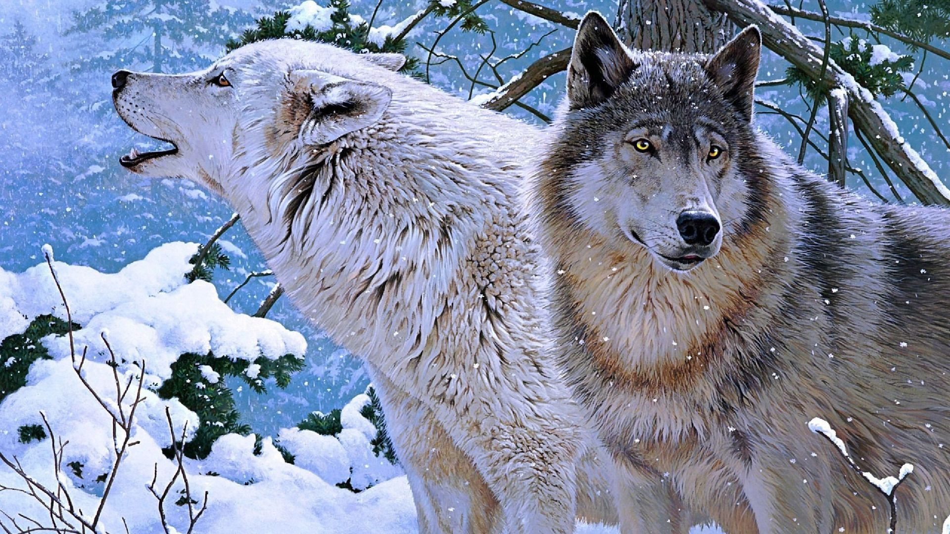 The Wolf In Winter Pictures