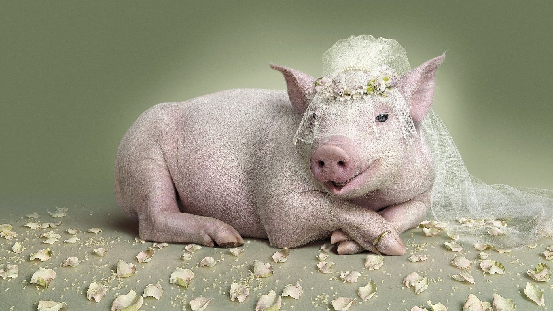 The Year Of The Pig Photos