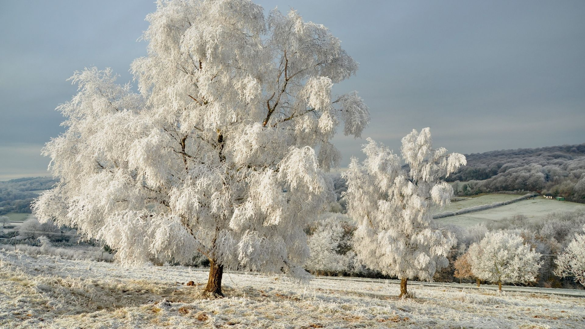 Trees In Frost Photo