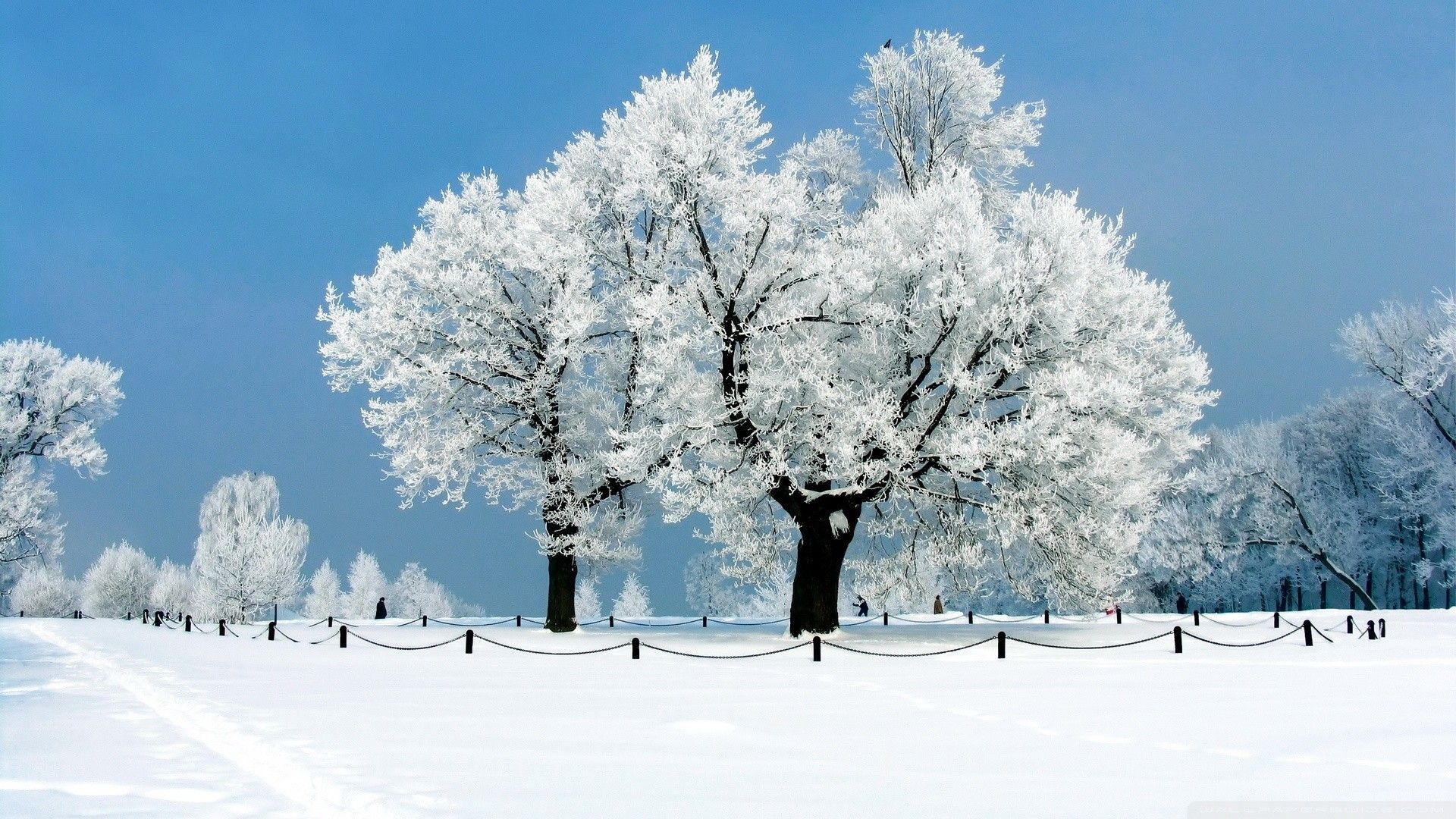 Trees In Snow Pictures