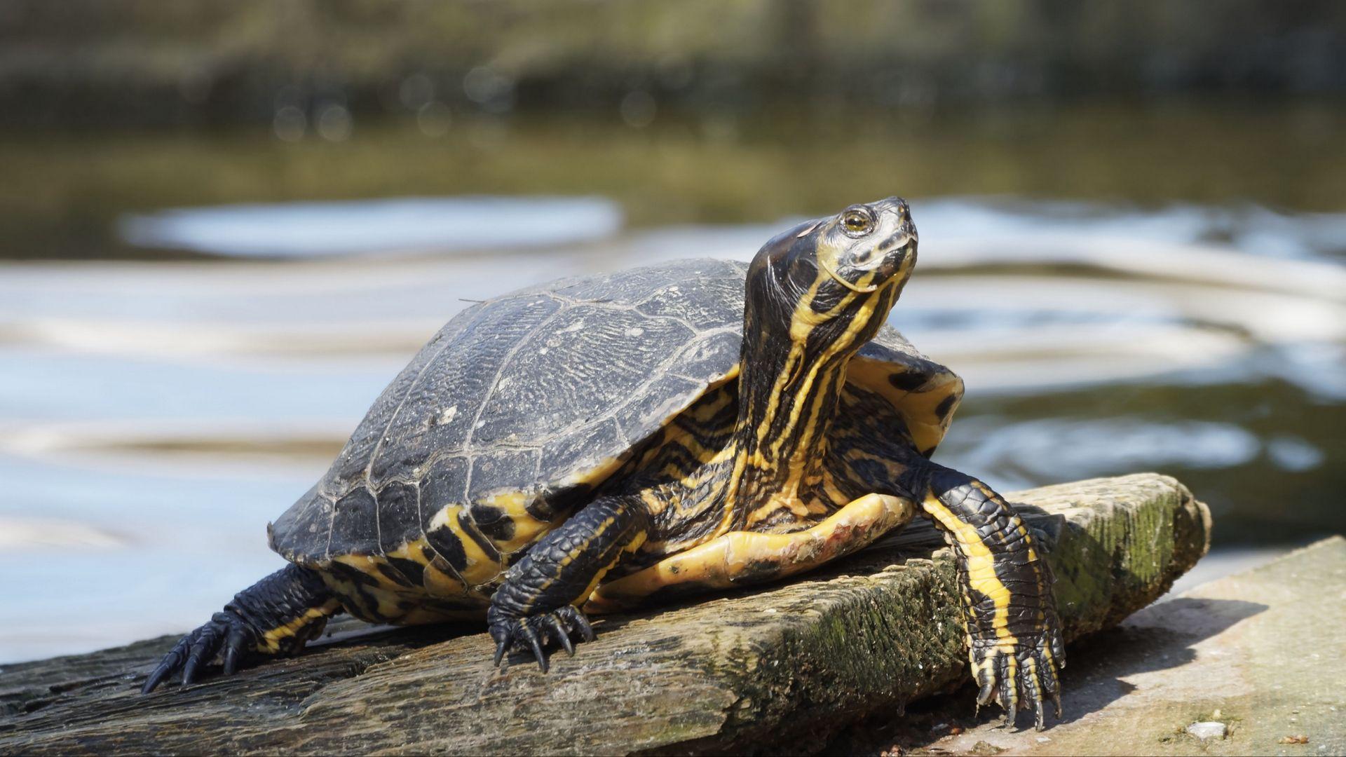 Turtle Beautiful Photo