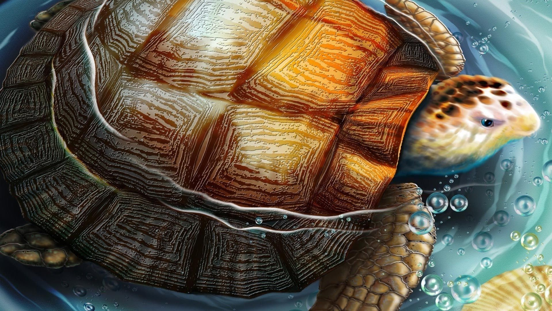 Turtle Beautiful Pictures