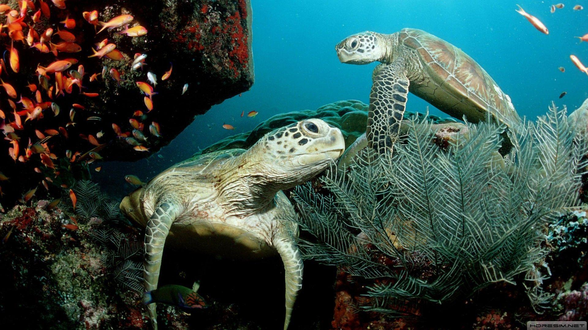 Turtle Under Water Photo