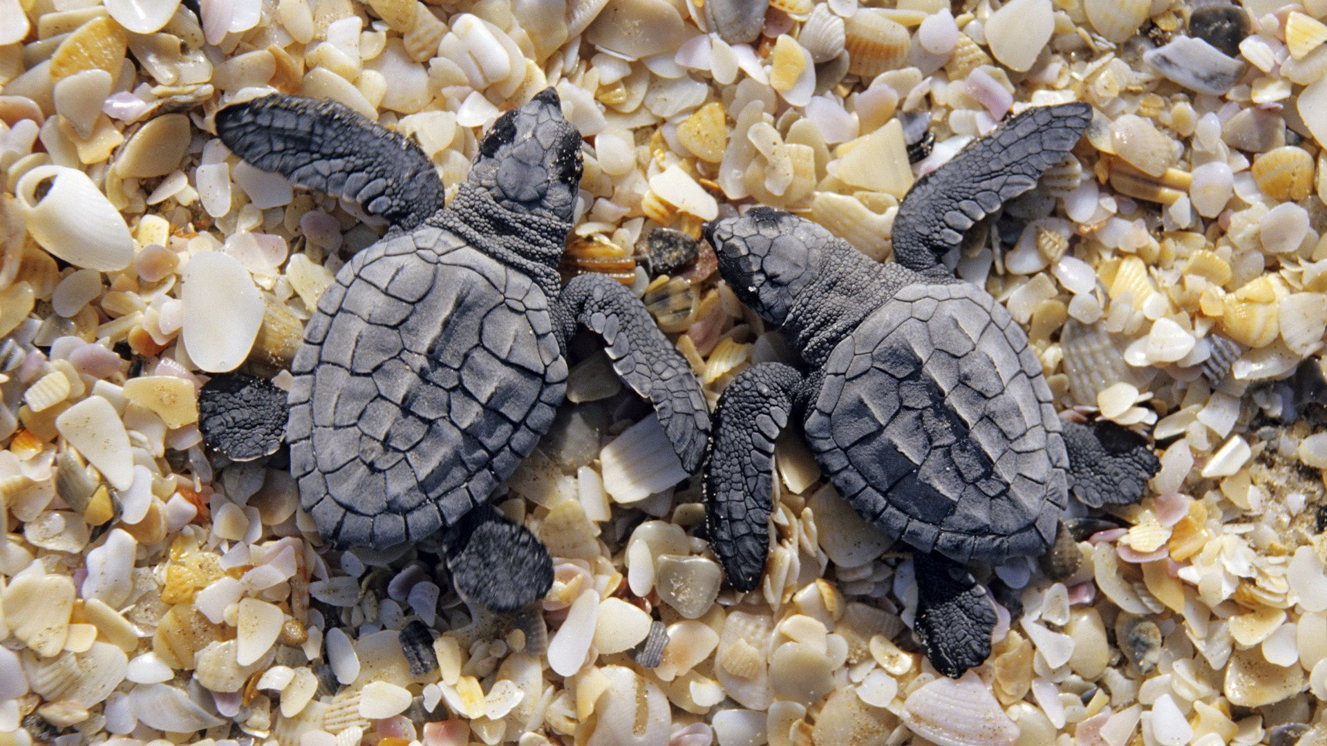 Turtles With Shells