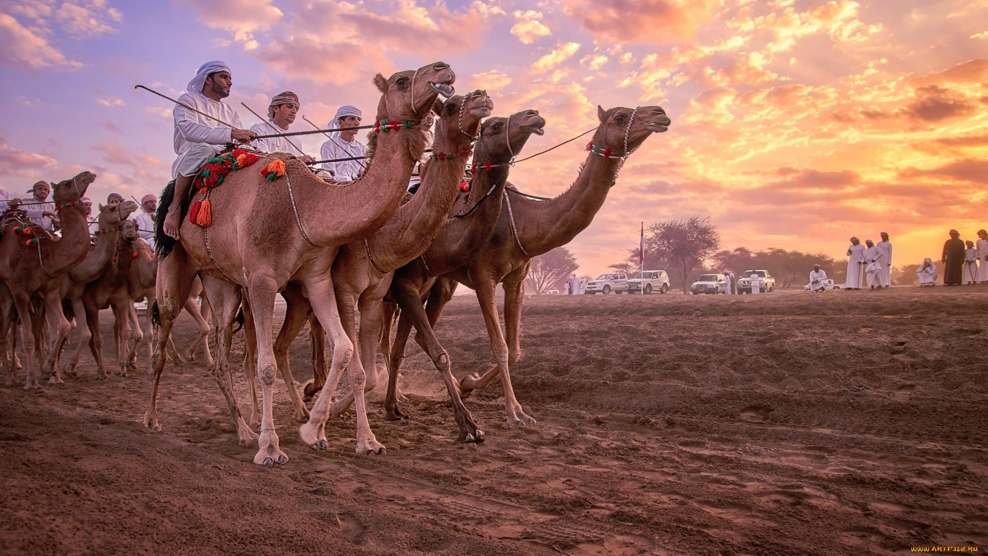 Wallpapers Camels