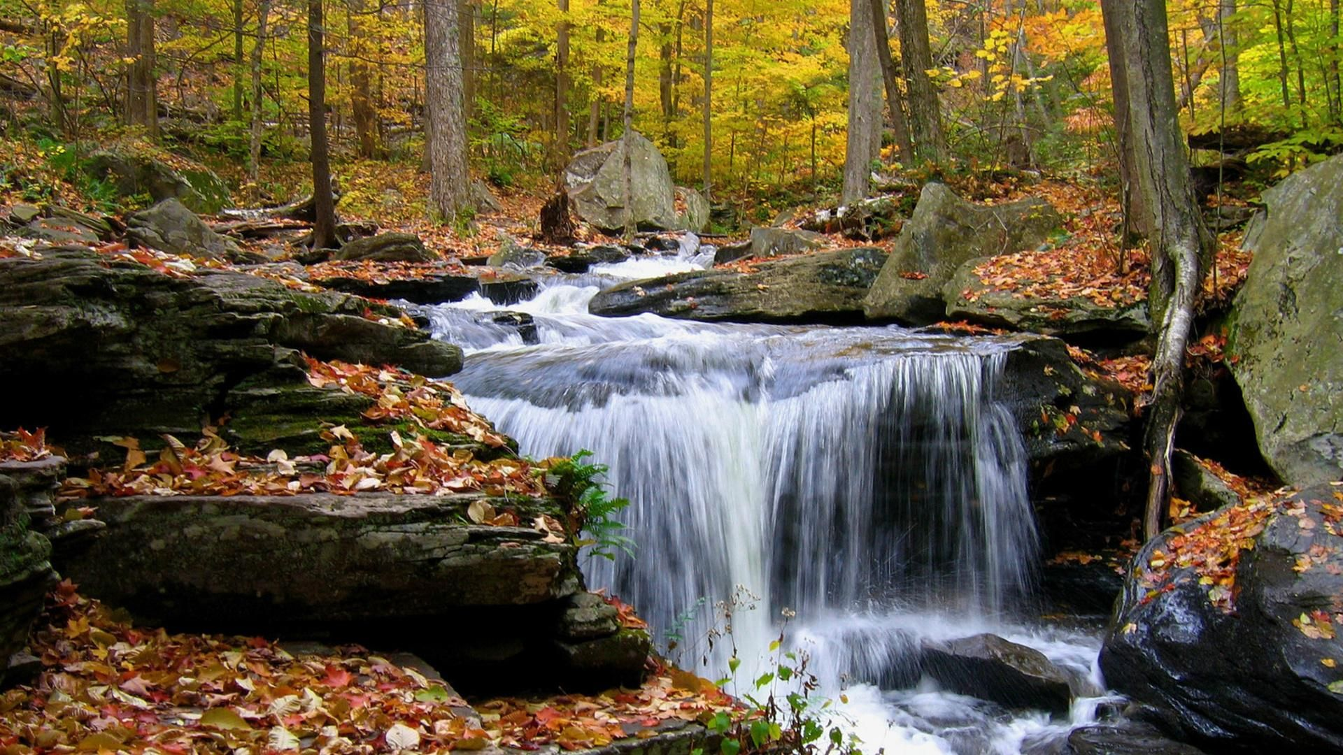 Waterfall In The Forest Pictures