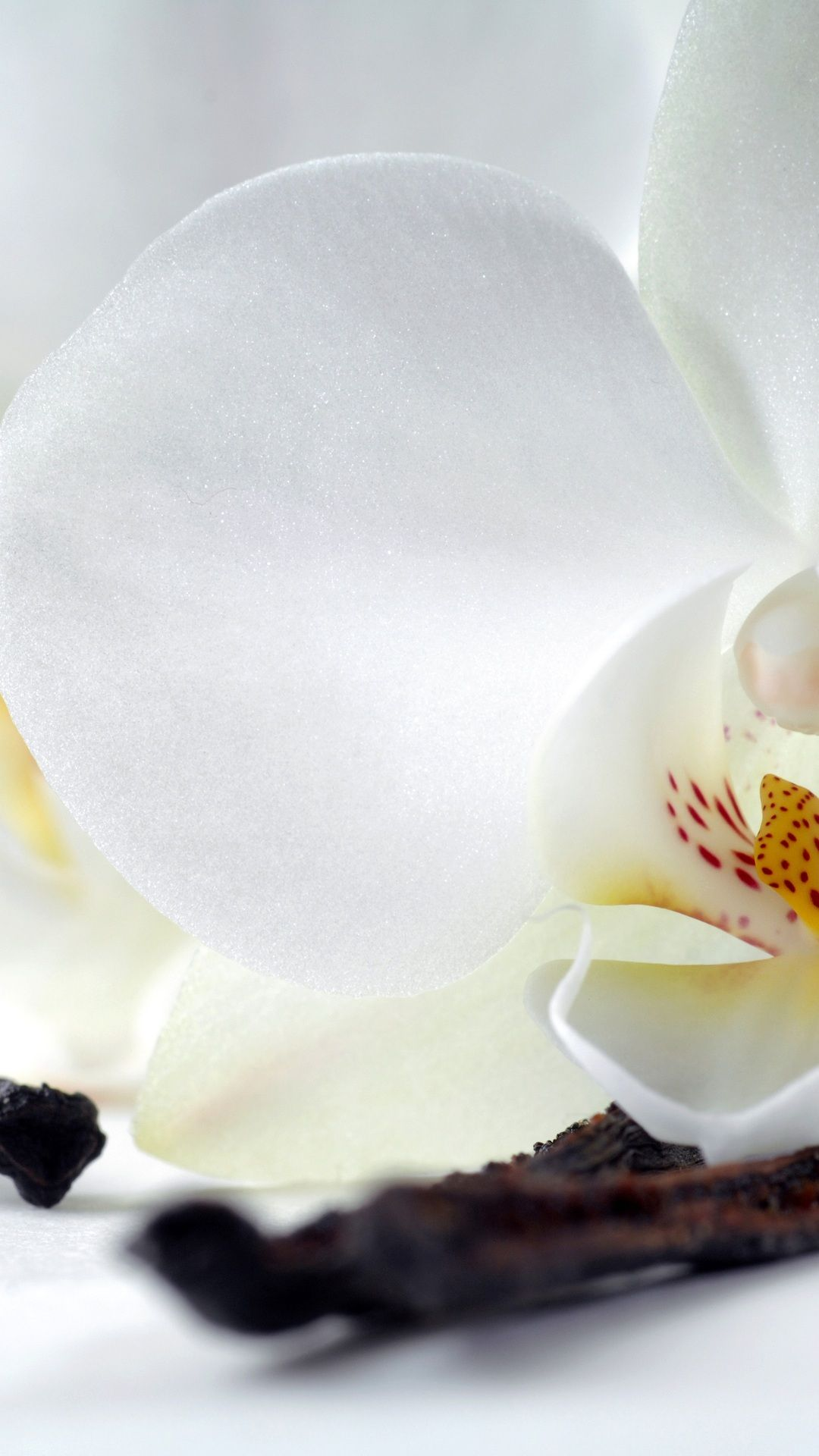 White Orchids Photo High Resolution