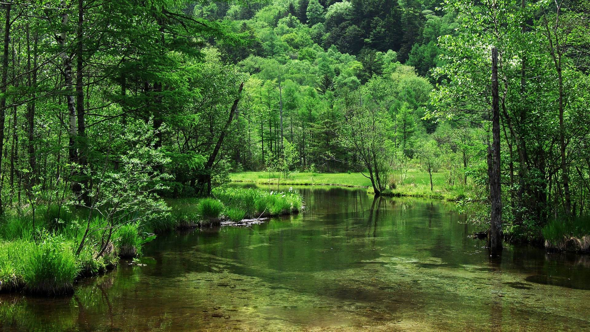 Wild Nature Forest