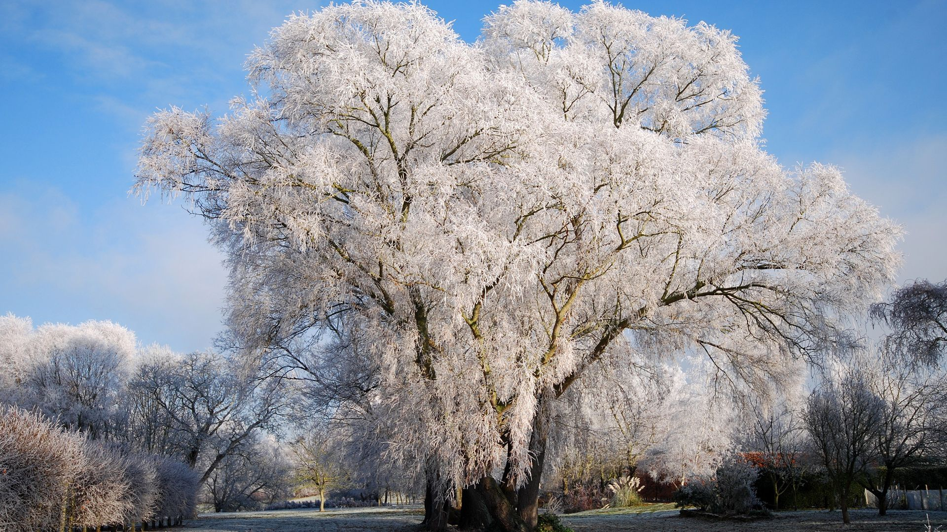 Winter Snow Frost Trees