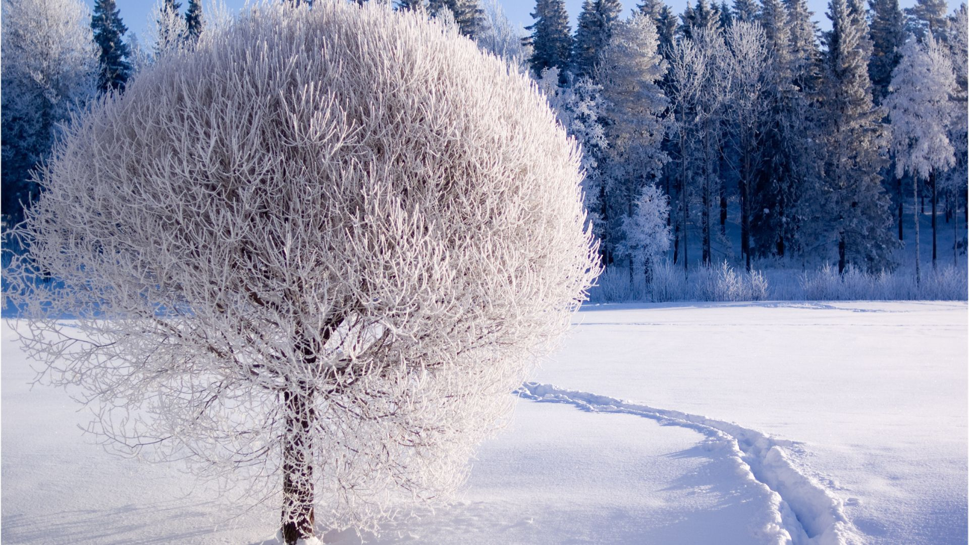 Winter Trees In The Snow