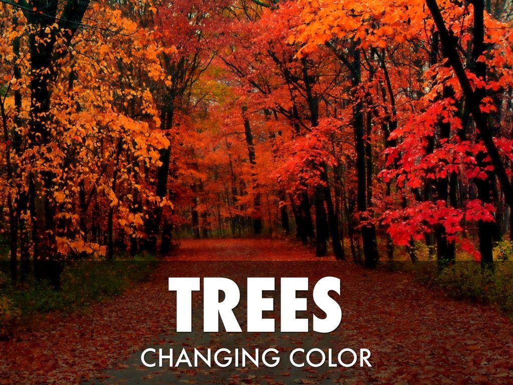 Beautiful Fall Wallpaper