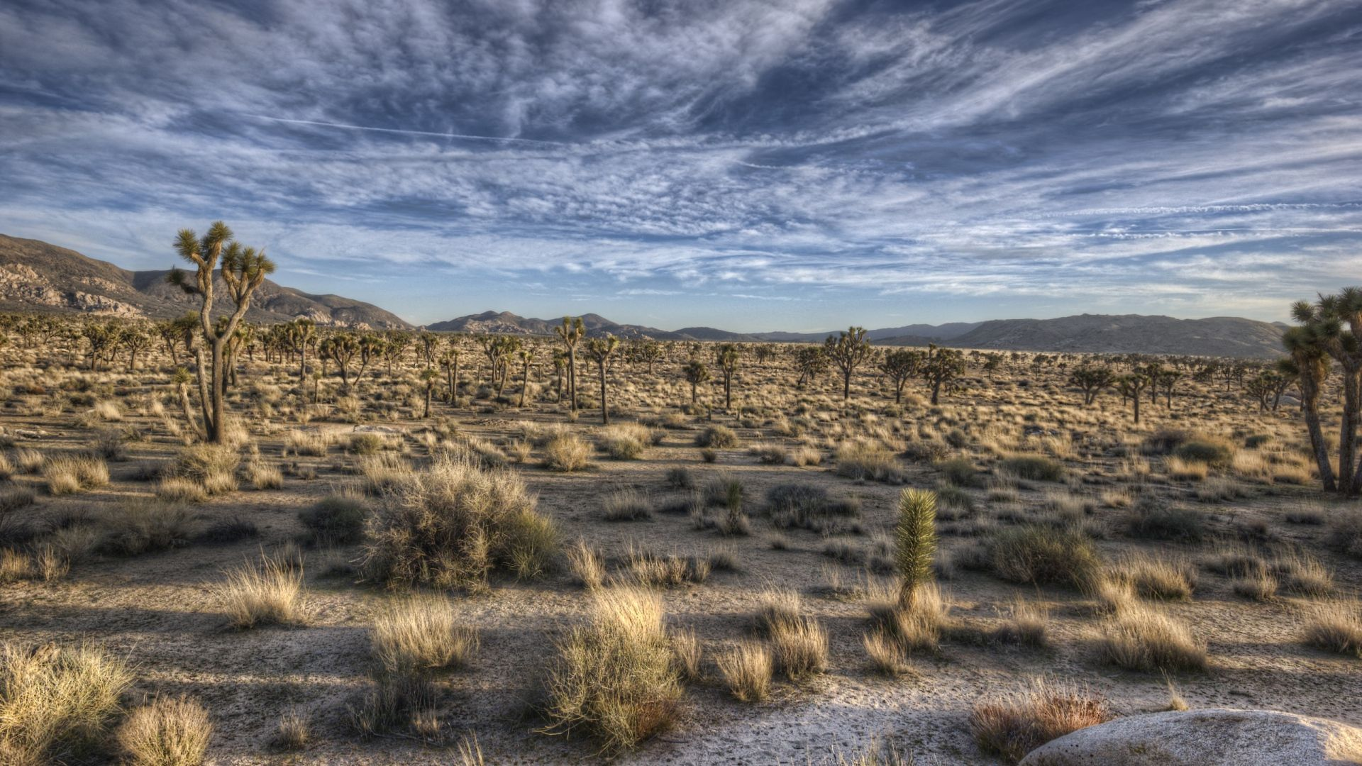 Desert Foothills Landscape free picture