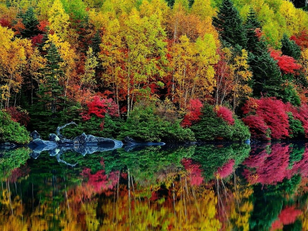 Forest In Autumn Photo Is Beautiful