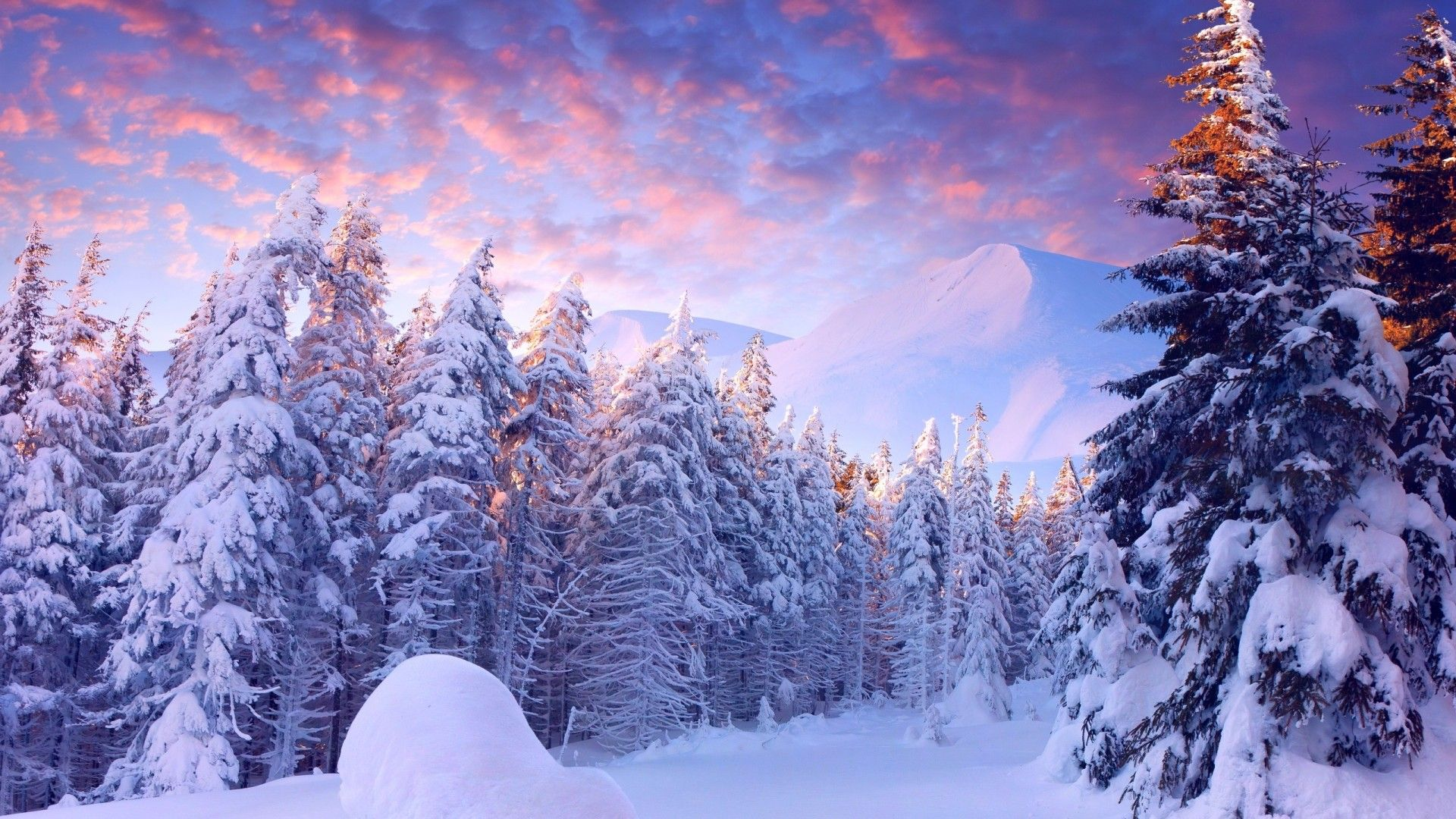 Free Winter