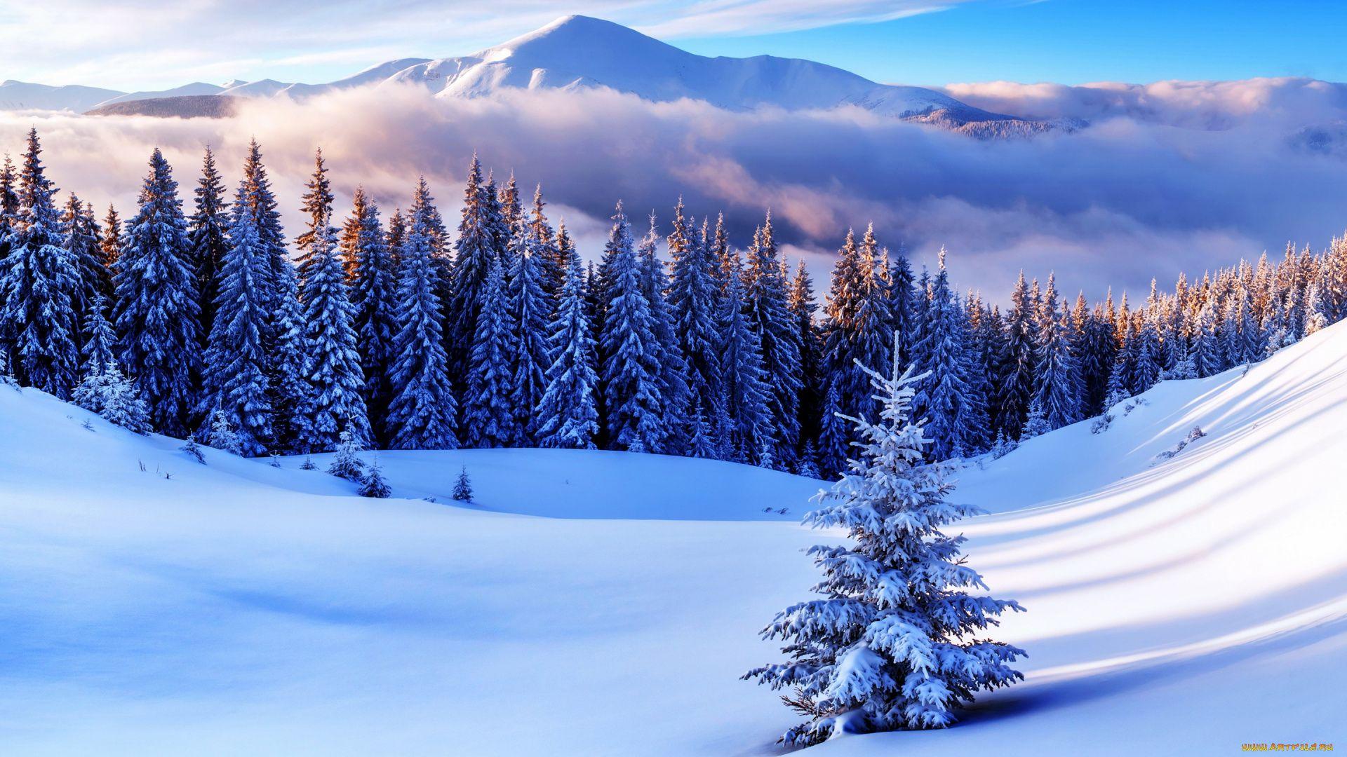 Free Winter good background