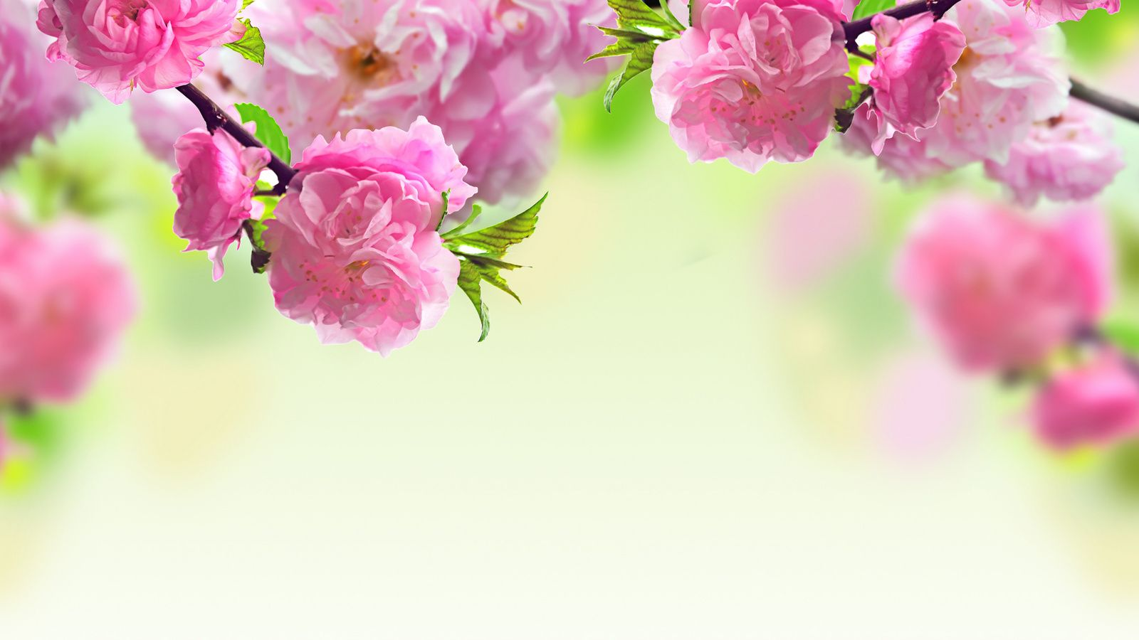 Images Flowers Background