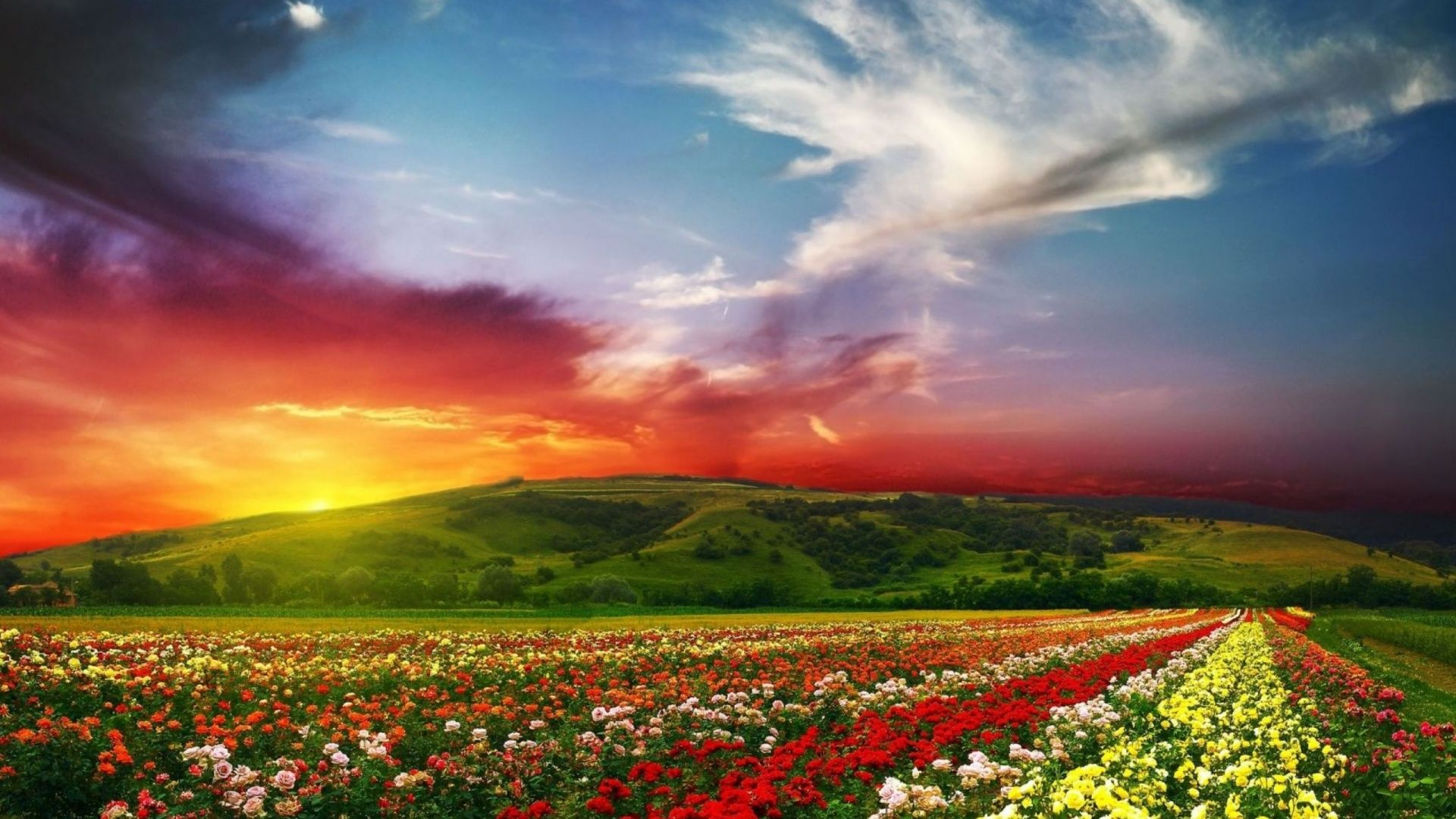 Most Beautiful Flower background image
