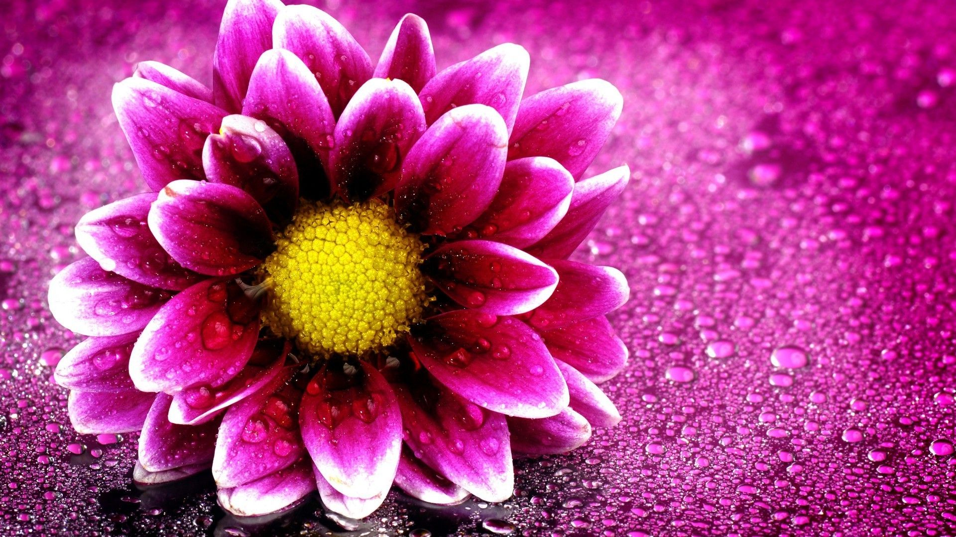 Most Beautiful Flowers wallpaper download