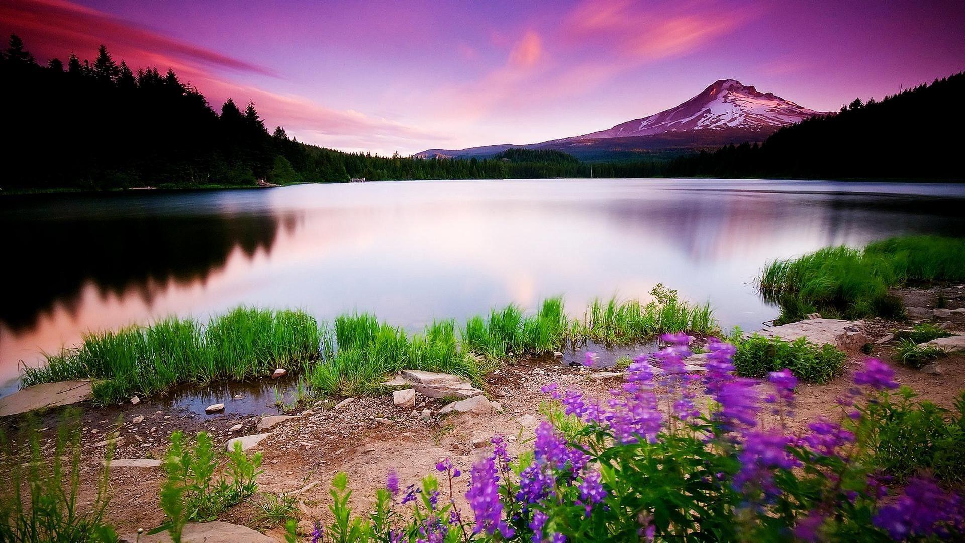 Nature Photo Hd 1080p background