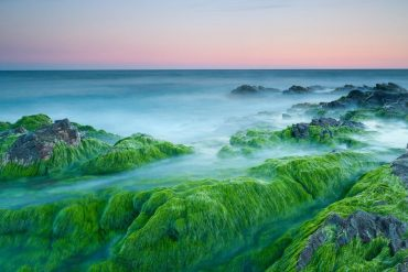 Nature Pictures Ocean