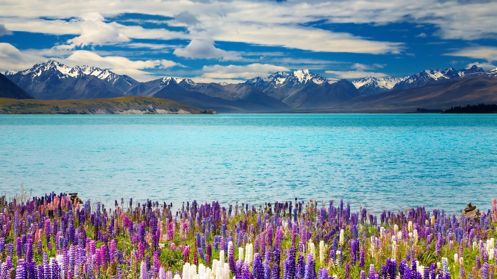 New Zealand laptop background wallpaper