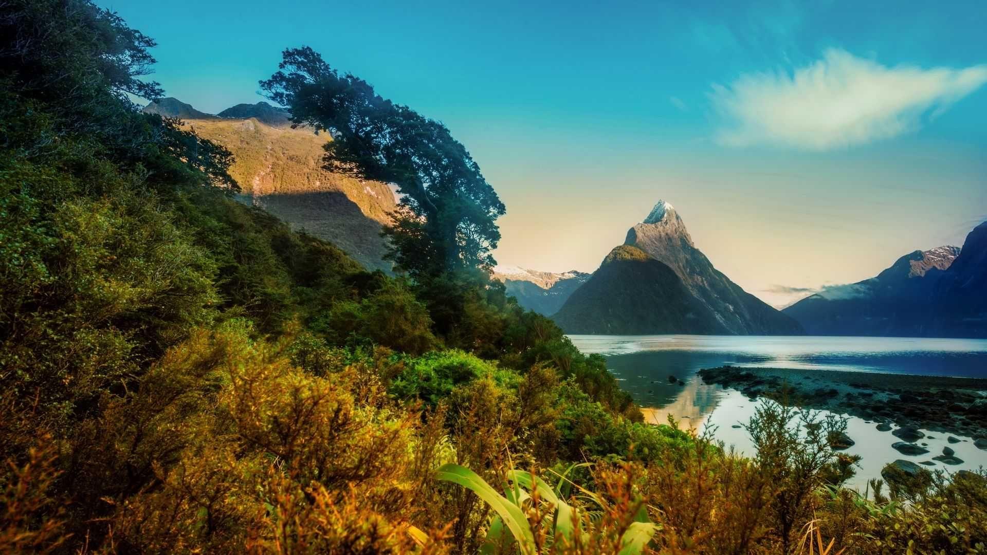 New Zealand free background